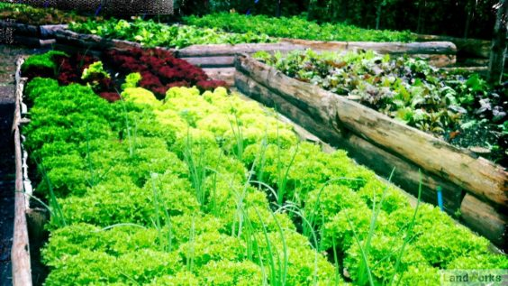 landworks_market_garden_raised_beds_salad_veg_growing