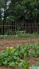 landworks_market_garden_veg_beds_growing