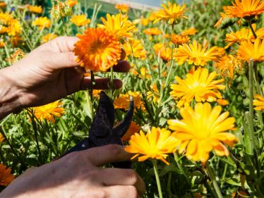 recourse_flowers_garden