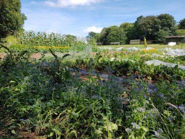 veg_growing_field_landworks_charity