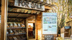 landworks charity christmas market garden stall dartington devon 300x166 - Prisoner Training & Placements