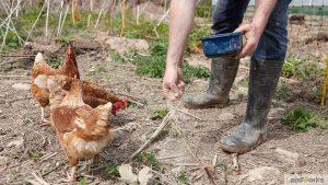 landworks eggs market garden website 300x169 - Prisoner Training & Placements