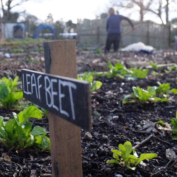 market garden - Prisoner Training & Placements