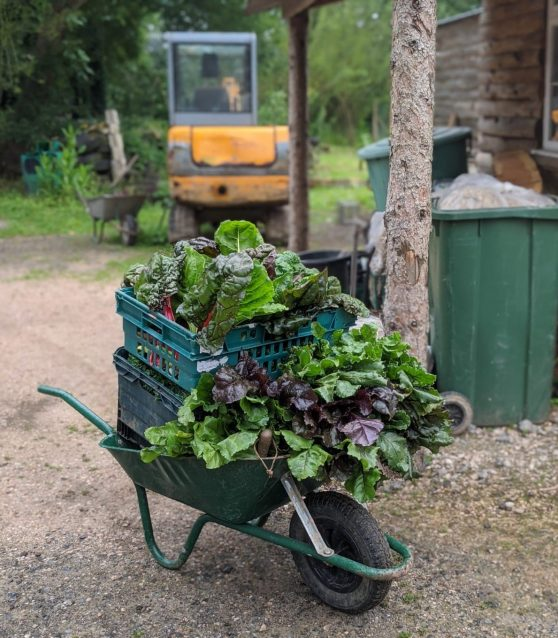 Wheelbarrow Harvest 558x638 - Prisoner Training & Placements