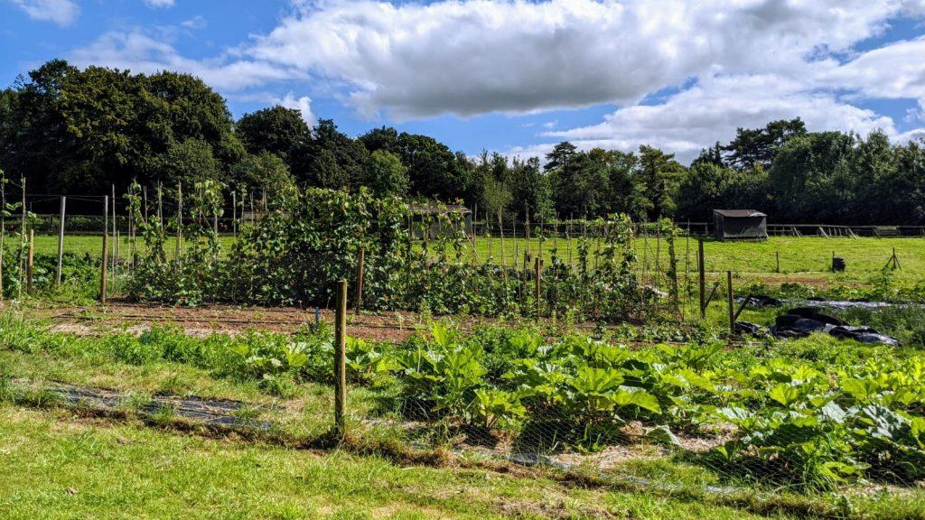 market garden wide 1024x576 - Prisoner Training & Placements